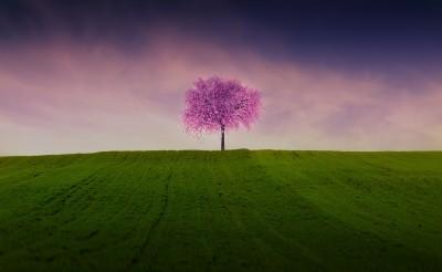 Drzewko prosiaczka