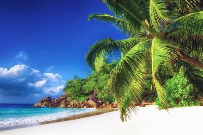 Na tropikalnej plaży