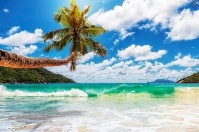 Palma na tropikalnej plaży