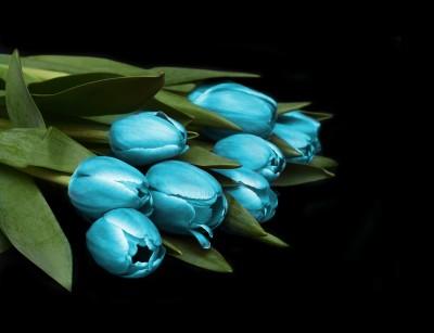 Turkusowe tulipany