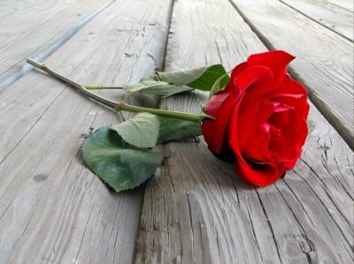 Róża na deskach