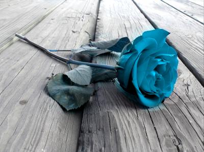 Niebieska róża na deskach