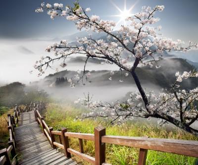 Kwitnąca japońska wiśnia