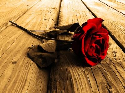 Gustowna róża na brązowych  deskach
