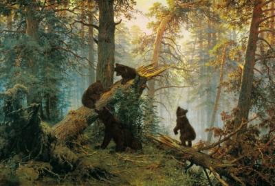Szyszkin Poranek w sosnowym lesie