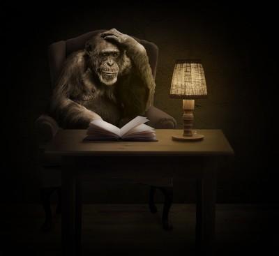 Światowy Dzień Szympansa